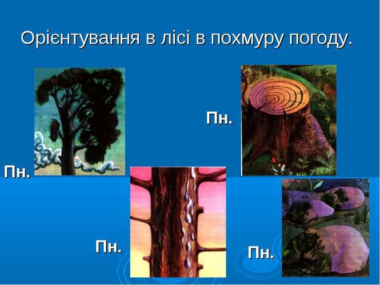 Орієнтування в лісі в похмуру погоду. Пн. Пн. Пн. Пн.