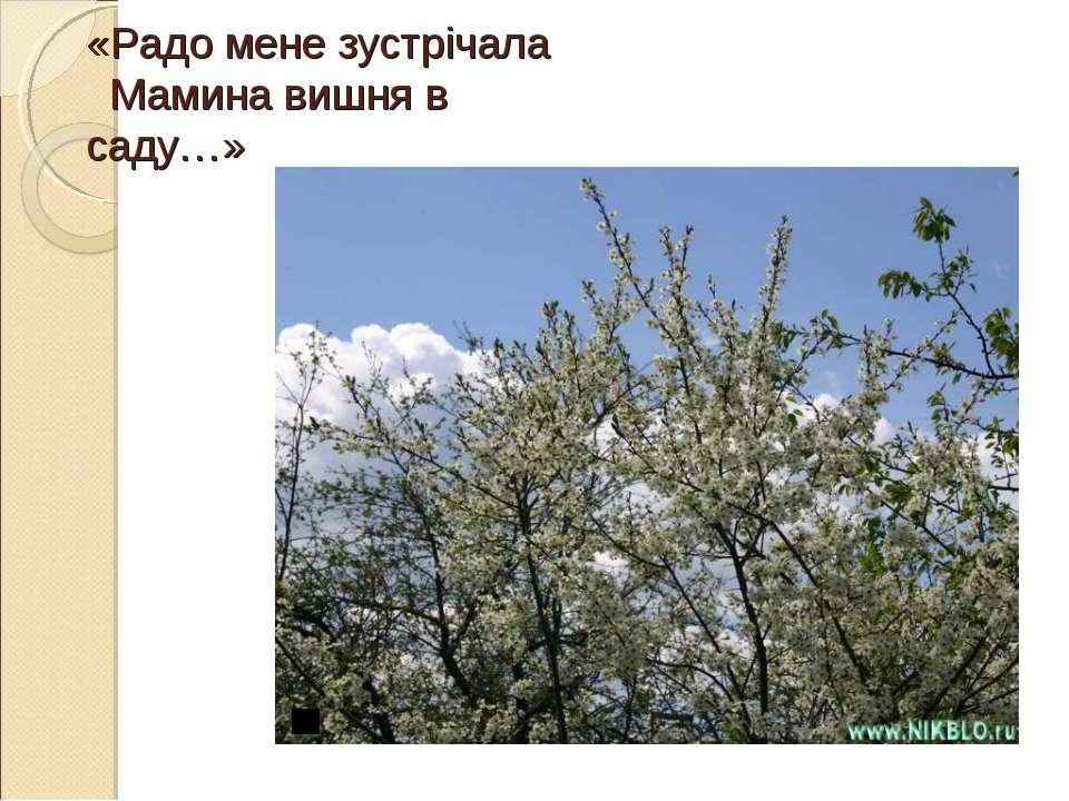 «Радо мене зустрічала Мамина вишня в саду…»