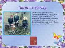 Захисти квітку У Компаніївському лісгоспі на Кіровоградщині почали вирощувати...