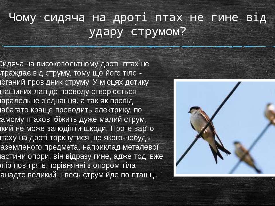 Чому сидяча на дроті птах не гине від удару струмом? Сидяча на високовольтном...