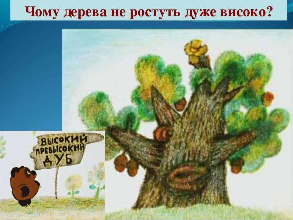 Чому дерева не ростуть дуже високо?