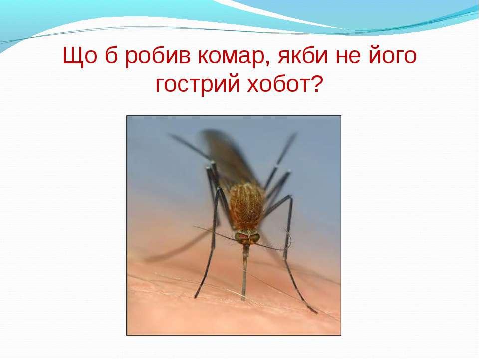 Що б робив комар, якби не його гострий хобот?