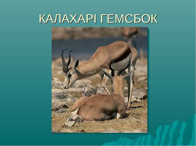 КАЛАХАРІ ГЕМСБОК