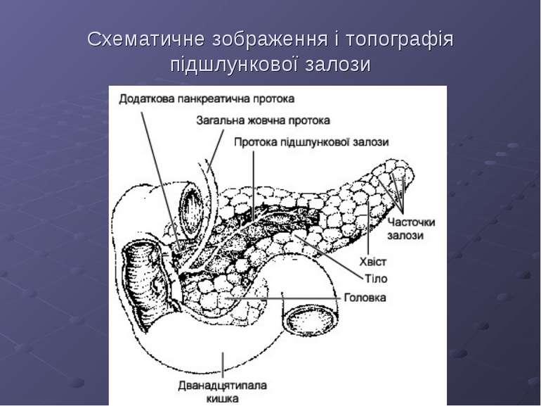 Схематичне зображення і топографія підшлункової залози