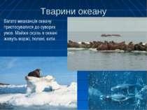 Тварини океану Багато мешканців океану пристосувалися до суворих умов. Майже ...