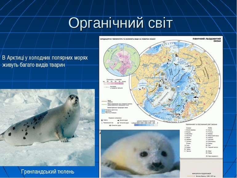 Органічний світ В Арктиці у холодних полярних морях живуть багато видів твари...