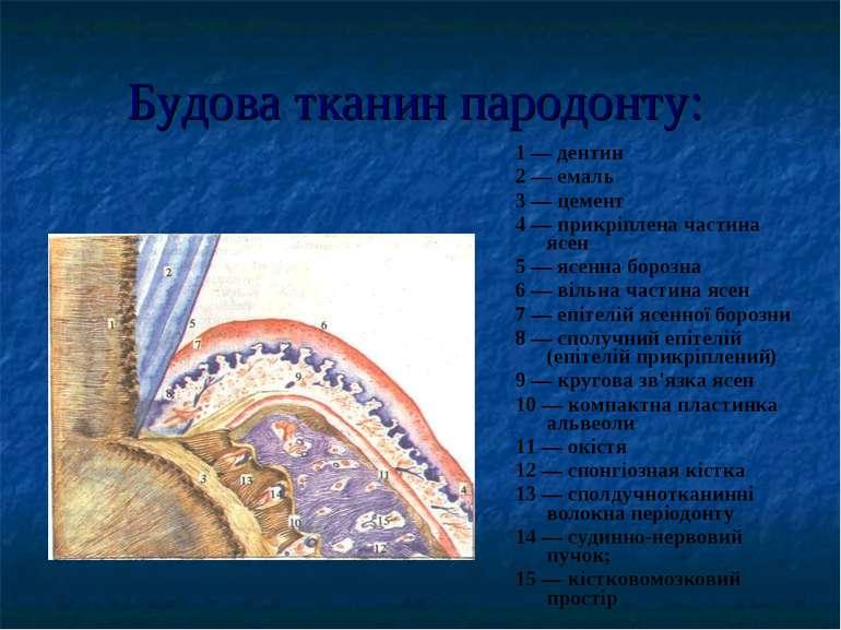 Будова тканин пародонту: 1 — дентин 2 — емаль 3 — цемент 4 — прикріплена част...