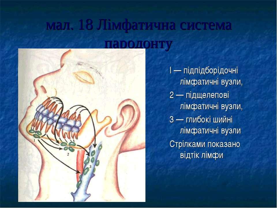 мал. 18 Лімфатична система пародонту I — підпідборідочні лімфатичні вузли, 2 ...