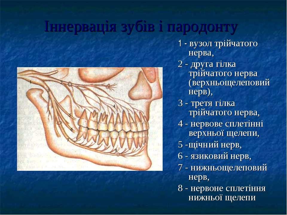 Іннервація зубів і пародонту 1 - вузол трійчатого нерва, 2 - друга гілка трій...