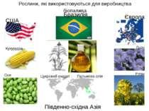 Рослини, які використовуються для виробництва біопалива США Кукурудза Соя Євр...