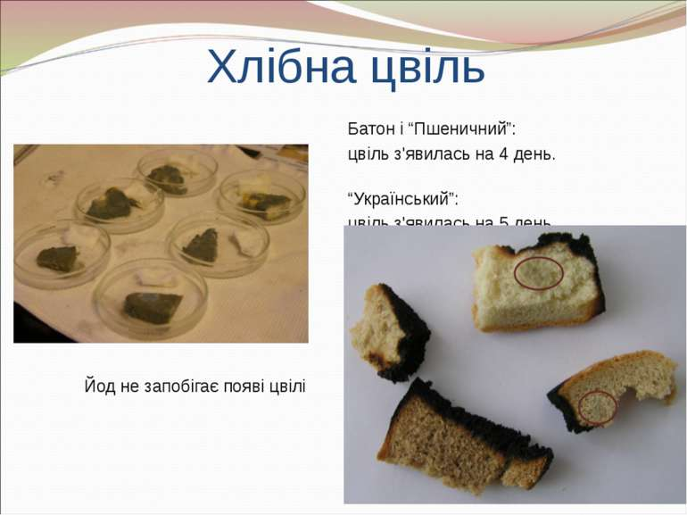 """Хлібна цвіль Батон і """"Пшеничний"""": цвіль з'явилась на 4 день. """"Український"""": ц..."""