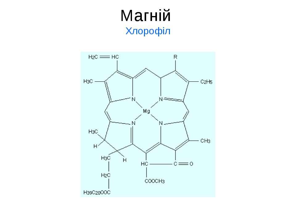Магній Хлорофіл