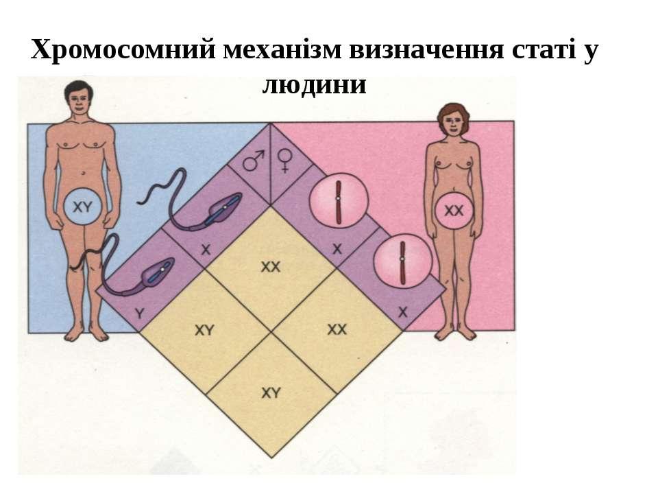 Хромосомний механізм визначення статі у людини
