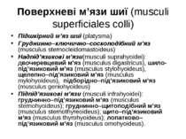 Поверхневі м'язи шиї (musculi superficiales colli) Підшкірний м'яз шиї (platy...
