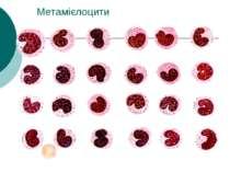 Метамієлоцити