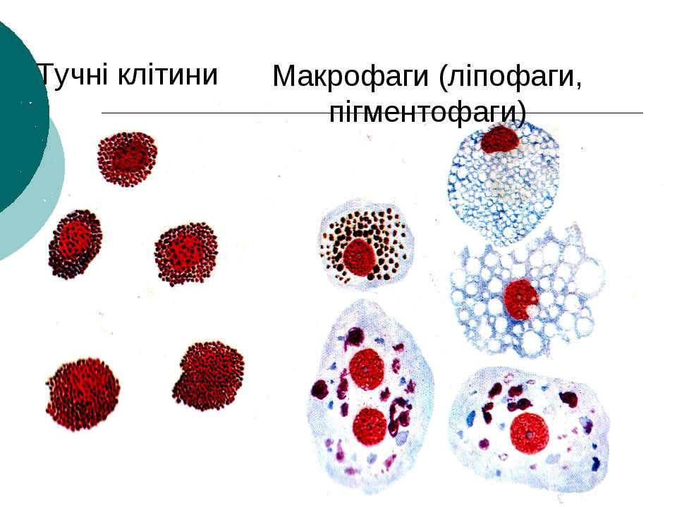 Тучні клітини Макрофаги (ліпофаги, пігментофаги)