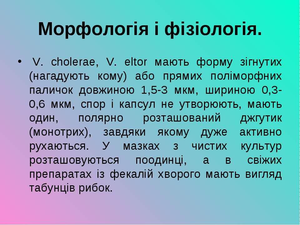 Морфологія і фізіологія. V. cholerae, V. eltor мають форму зігнутих (нагадую...