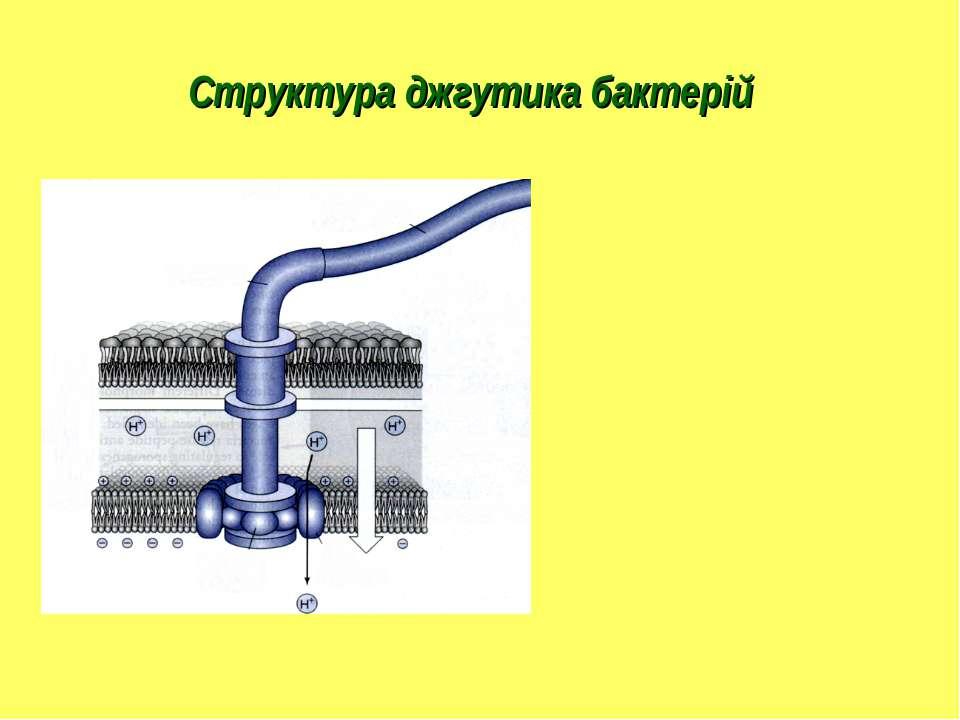 Структура джгутика бактерій