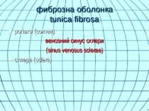 фиброзна оболонка tunica fibrosa рогівка (cornea) венозний синус склери (sinu...
