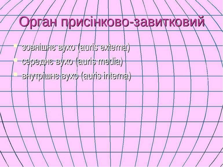 Орган присінково-завитковий зовнішнє вухо (auris externa) середнє вухо (auris...