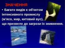 ЗНАЧЕННЯ Багато видів є об'єктом інтенсивного промислу (м'ясо, жир, китовий в...