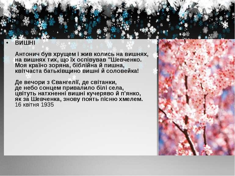 ВИШНІ Антонич був хрущем і жив колись на вишнях, на вишнях тих, що їх оспівув...