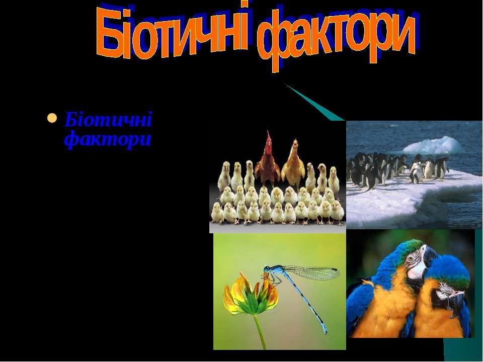 Біотичні фактори (біос -життя) – це види взаємозв'язків між різними організма...