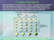 3 закон Менделя При схрещуванні гомозиготних особин, що відрізняються двома (...