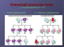 Взаємодія алельних генів 1 – зверхдомінування (Аа > АА) 2 - повне домінування...