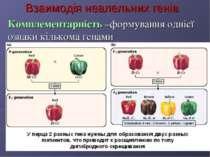 Взаимодія неалельних генів Комплементарність –формування однієї ознаки кілько...