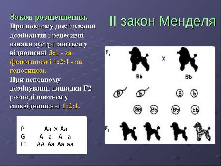 ІІ закон Менделя Закон розщеплення. При повному домінуванні домінантні і реце...