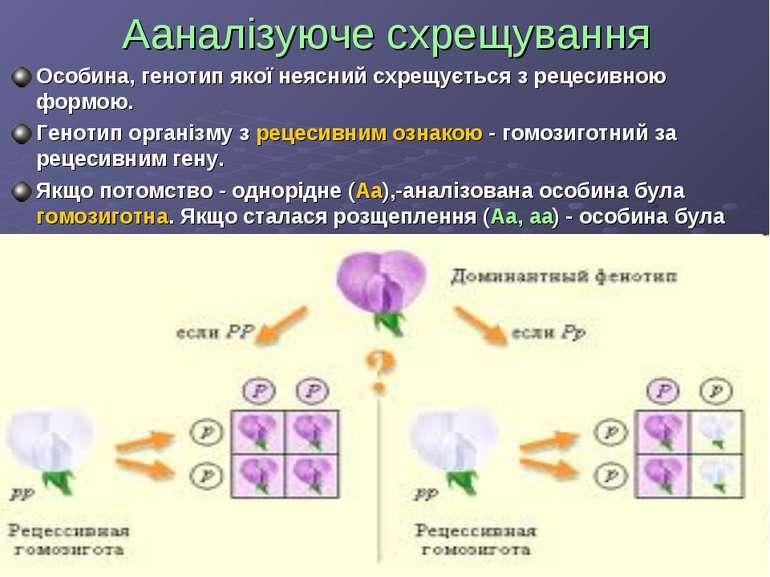 Aaналізуюче схрещування Особина, генотип якої неясний схрещується з рецесивно...