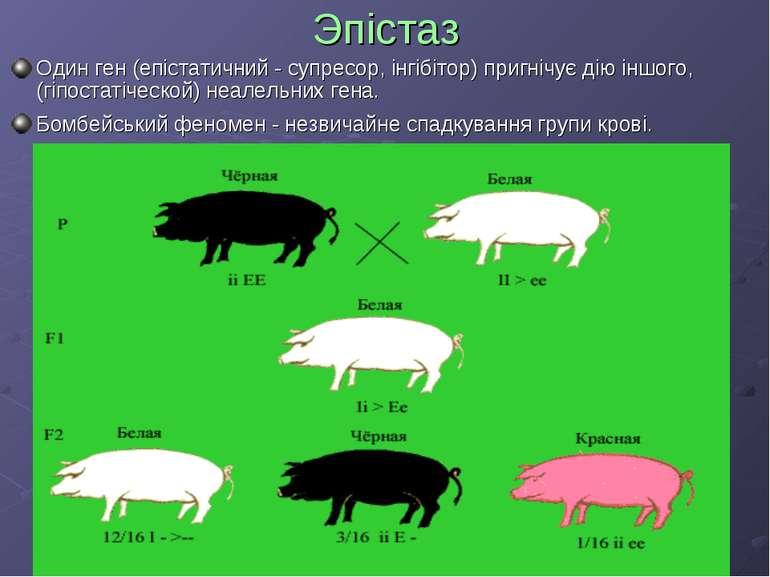 Эпістаз Один ген (епістатичний - супресор, інгібітор) пригнічує дію іншого, (...