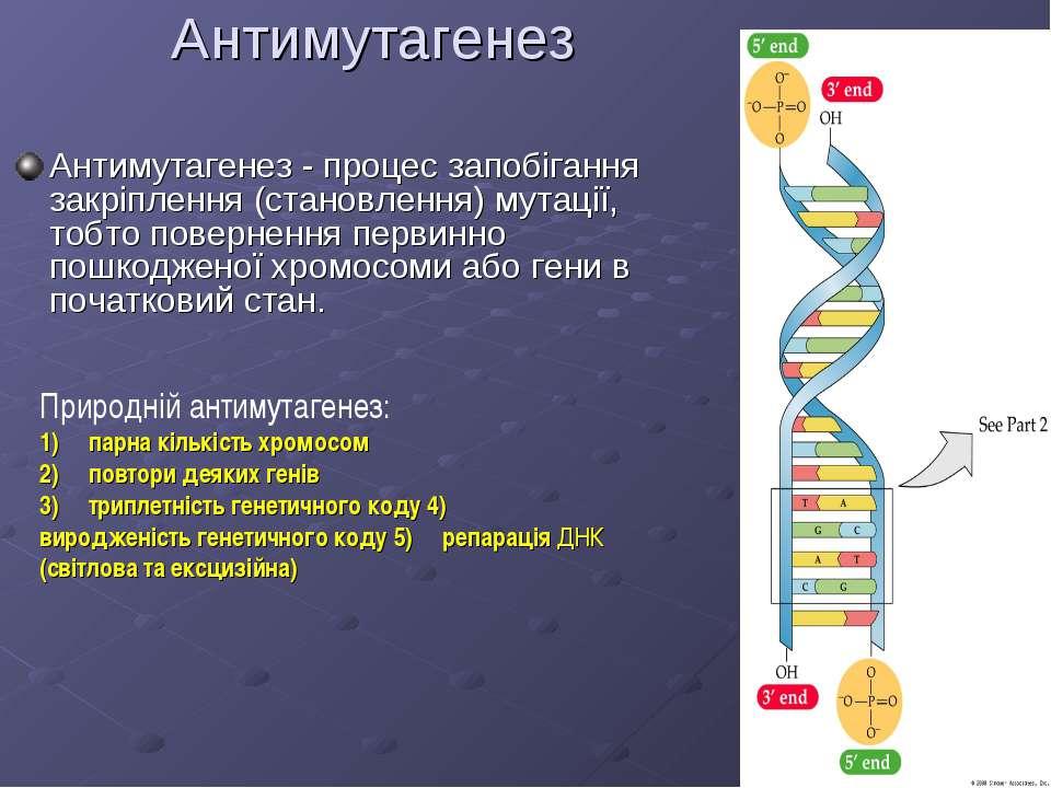 Антимутагенез Антимутагенез - процес запобігання закріплення (становлення) му...