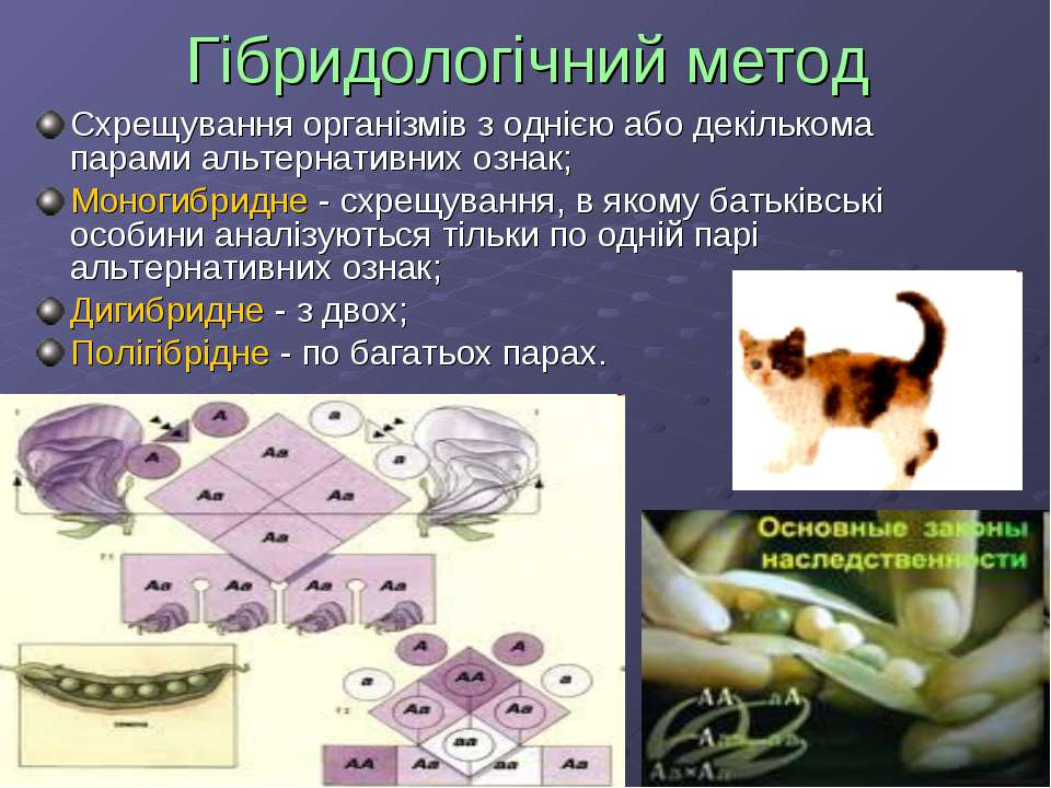 Гібридологічний метод Схрещування організмів з однією або декількома парами а...