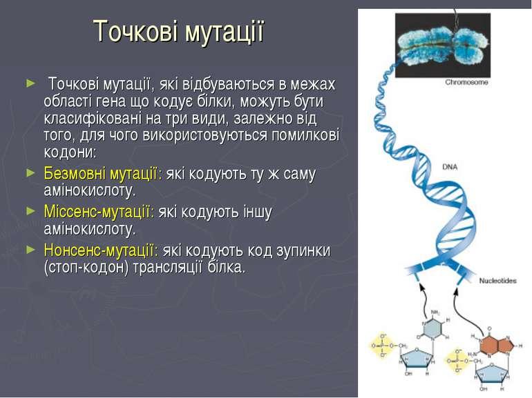 Точкові мутації Точкові мутації, які відбуваються в межах області гена що код...