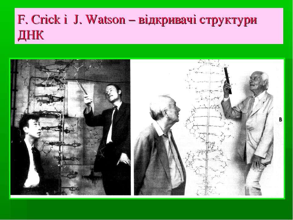 F. Crick i J. Watson – відкривачі структури ДНК