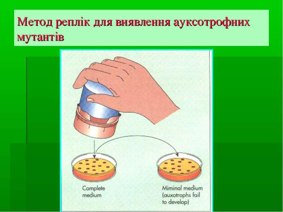 Метод реплік для виявлення ауксотрофних мутантів