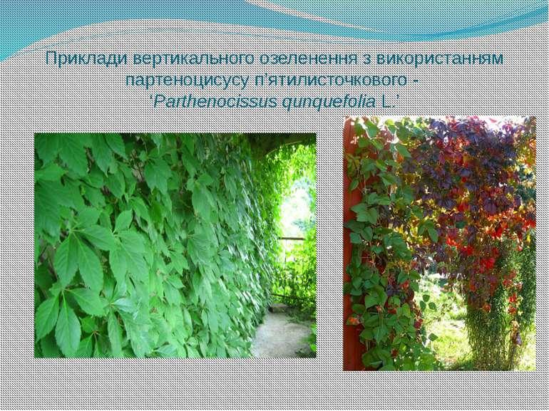 Приклади вертикального озеленення з використанням партеноцисусу п'ятилисточко...