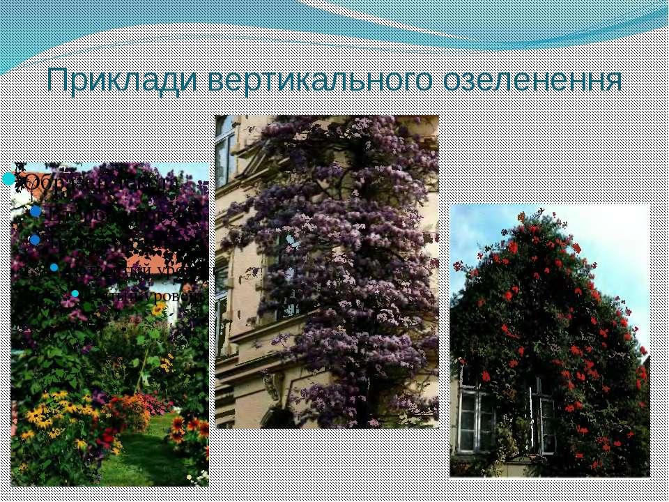 Приклади вертикального озеленення