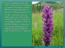 Згідно з гербарними матеріалами 1960-70-х років (CHER) для території дослідже...