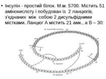 Інсулін - простий білок. М.м. 5700. Містить 51 амінокислоту і побудован із 2 ...