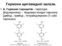 Гормони щитовидної залози. А. Гормони тироцитів - тиреоїдні (йодтироніни) – й...