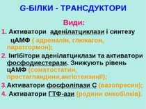 G-БІЛКИ - ТРАНСДУКТОРИ Види: 1. Активатори аденілатциклази і синтезу цАМФ ( а...