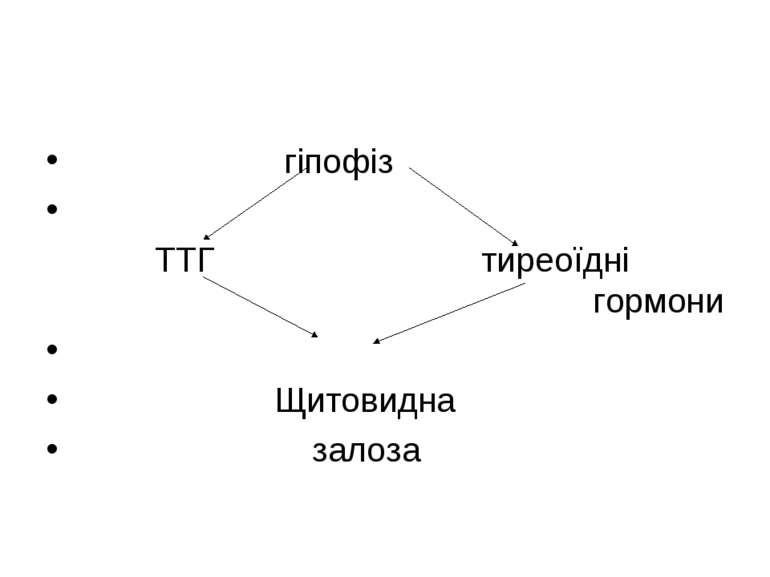 гіпофіз ТТГ тиреоїдні гормони Щитовидна залоза