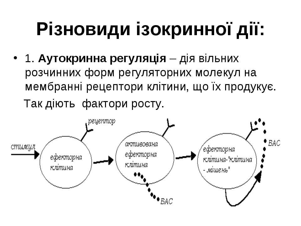 Різновиди ізокринної дії: 1. Аутокринна регуляція – дія вільних розчинних фор...