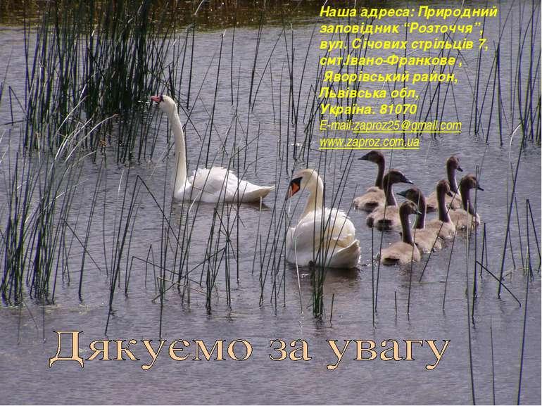 """Наша адреса: Природний заповідник """"Розточчя"""", вул. Січових стрільців 7, смт.І..."""