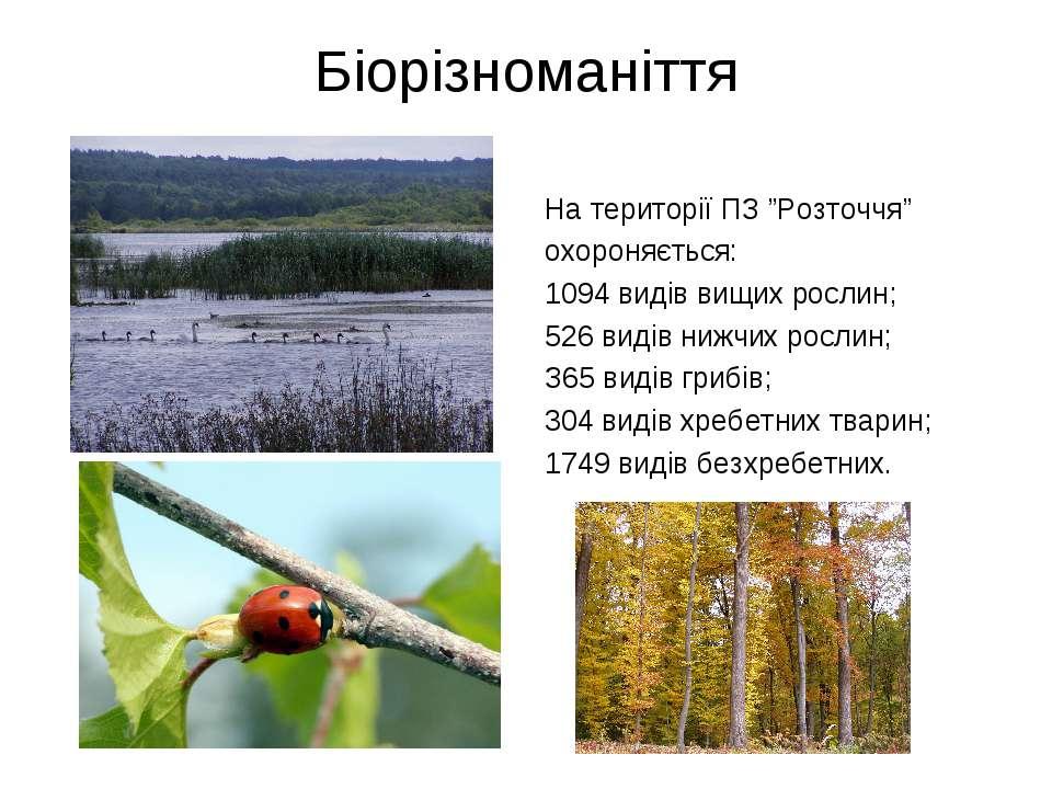 """Біорізноманіття На території ПЗ """"Розточчя"""" охороняється: 1094 видів вищих рос..."""