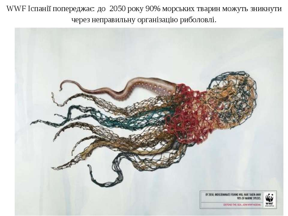 WWF Іспанії попереджає: до 2050 року 90% морських тварин можуть зникнути чере...