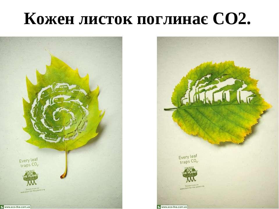 Кожен листок поглинає СО2.